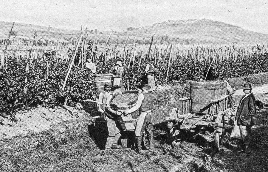cremant-vendanges-riquewihr-1900-1