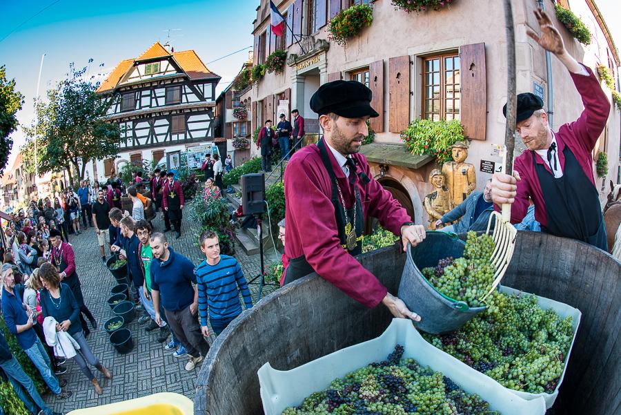 drinkalsace-vendanges-dambach-cheval-jpk-900x600-10