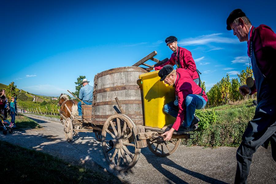 drinkalsace-vendanges-dambach-cheval-jpk-900x600-4
