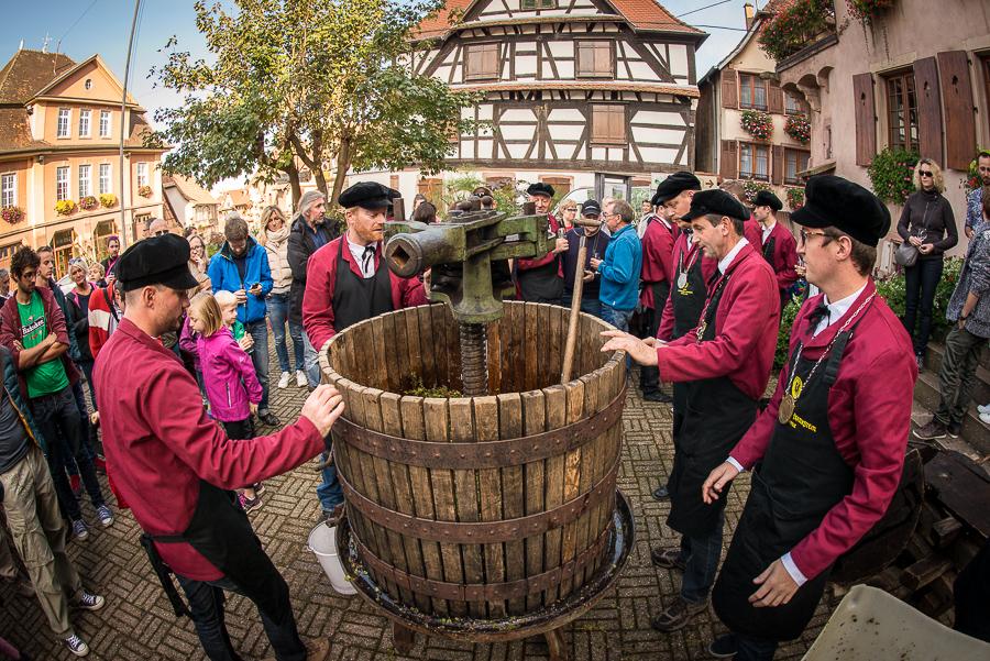 drinkalsace-vendanges-dambach-pressurage-jpk-900x600-1481